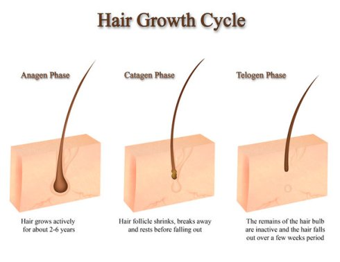 hair-growth-diagram-by-polariscaprica-on-deviantart-9hruco2q
